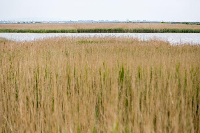 Strong Island Photography Walkshop - Farlington Marshes